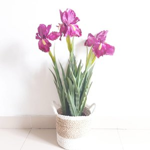 Ungu & hijau  Perpaduan yang cantik ❤  #일상 #첫줄 #인스타그램  #선팔 #맞팔 #맞팔해요 #소통해요 #소통 #셀스타그램 #인친 #사진 #댓글 #데일리 #팔로우 #좋아요  #bloggerperempuan #jjbfeaturedme #beautyblogger #kawaii #designer #flower #purple #clozetteid #green #bloggerindonesia #ggrep
