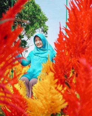 When you feel happy, let it show on your face 🌸 . . . #flower #red #yellow #garden #travel #travelgram #travelblogger #hijabtravel #dailyhijab #picoftheday #photooftheday #jogja #explorebantul #instadaily #instatravel #instastory #likesforlike #clozetteid