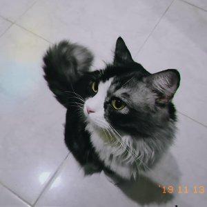 Kucing fotogenikku ≧ω≦#Clozetteid #catlovers #catstagram #mainecoon #persiancat #maincoonstagram #persiancatofinstagram