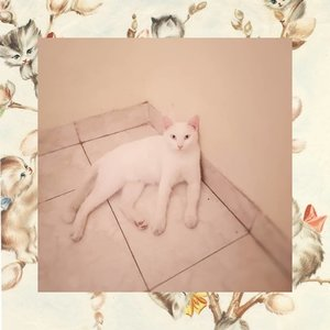 Hi everyone, my name is CatCat. I'm male, 1.5 years old 😜👌. #Cat#Instacat #Instacats #Meow #Instacat_meows #Kitty #Kittycat #Catofinstagram #Cutecat #Instapet #Catoftheday #Kittylove #Instakitty #Cateye #Catlover #Cateyes #Catlovers #Cutecats #Animals #Catlove #Catloaf #Mypet #Kittens #Clozette #Clozetteid