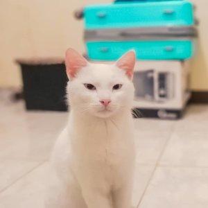 FINALLY an insta worthy picture of #CatCat 2019 ❤😄😂🤣 #Cat#Instacat #Instacats #Meow #Instacat_meows #Kitty #Kittycat #Catofinstagram #Cutecat #Instapet #Catoftheday #Kittylove #Instakitty #Cateye #Catlover #Cateyes #Catlovers #Cutecats #Animals #Catlove #Catloaf #Mypet #Kittens #Clozette #Clozetteid