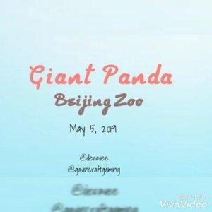 ` Senangnya tak disangka bertemu si boneka hidup... walaupun sudah beberapa bulan di Beijing memang belum niat bulat mau melihat Xiong Mao, terjemahan panda dalamBahasa Mandarin, pengen meluk erat rasanya... ~ read the full article at ➡️➡️➡️ www.dewiratihpurnama.com 🌐  #letsguide #xiongmao #giantpanda #beijing #beijingzoo #localguidesconnect #bloggerperempuan #clozetteid @googlelocalguides @bloggerperempuan