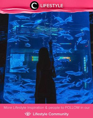 Stress reliever place you should visit after self-quarantine: Jakarta Aquarium! Image shared by Clozette Ambassador @reginabundiarti. Simak Lifestyle Update ala clozetters lainnya hari ini di Lifestyle Community. Yuk, share momen favoritmu bersama Clozette.