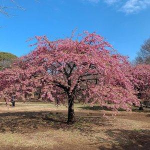 3 Taman Yang Menyuguhkan Pemandangan Unik Di Jepang