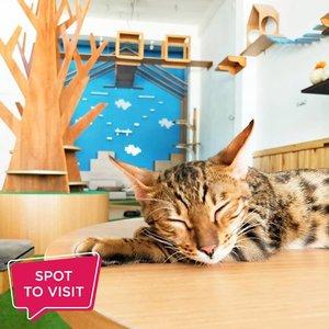 #SpotToVisit This WeekendNeko-Kepo Cat and Cafe @neko.kepo, Jl. Siwalankerto Timur, Surabaya.Yuk tag teman yang mau kamu ajak ke sini..📷 neko.kepo#ClozetteID #nekokepo