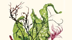 Is Seaweed the Perfect Food?