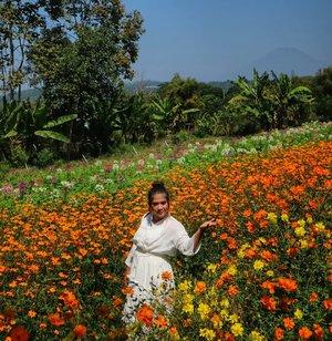 When in Semarang.. #flowers #semarang #garden #bandungan #indonesia #instaplace #instatravel #clozetteid #visitindonesia