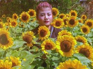 .Aku adalah mawar berduri diantara indahnya sang bunga matahari.Dan taukah kau terkadang aku menyakiti disaat kau mencoba mengagumiku..Shots with LG Q6📷 @zaky_1306 📌 Sunflower Fest @pvjofficial .#clozetteid #beauty #summer #mood