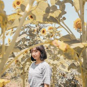 Sunflower still grows at night #clozetteid