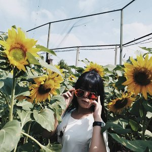 Jadi, apa makanan fav Hamtaro?? Happy weekend para manusia~ #vheiiの日記  #clozetteid #fujixa2 #bandung #sunflower  #akuinginliburan