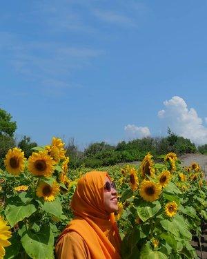 My forever obsession : 🌻🌻🌻🌻...Destinasi wajib selain gumuk pasir di #ifajogjatrip kemarin itu ke kebun bunga matahari!!!💛💛💛..Untungnya bisa sekalian satu tempat sama gumuk pasir. Tinggal nambah goceng aja langsung bisa keliling kebun bunga matahari. So happy!!!🌞..Ps: kalo ke sini mending pagi2 aja karena super 🔥🔥🔥🔥...#clozetteid #ggrep #wheninjogja #gumukpasirparangkusumo#ifatraveldiary #explorejogja #explorebantu #visityogyakarta