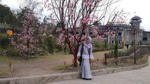 Sebelum ke Jepun beneran berburu sakura 🍃🍃 #ifatraveldiary  #clozetteid #visitjogja  #thelostworldcastle