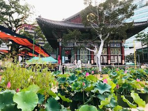 .Masih ingat K-drama A Korean Odyssey dimana karakter Jin Sun Mi punya aroma Bunga Lotus yang akhirnya dikejar semua hantu, duh aku aja masih baper sama ceritanya apalagi ada Lee Seung Gi.Ini adalah Jogyesa Temple merupakan salah satu pusat kebudayaan Buddhism di Korea, maka dari itu banyak bunga Lotus ditanam disini :) #VisitKoreaLater because #ourheartsarealwaysopen.Where : 55, Ujeongguk-ro, Jongno-gu, Seoul.#timetravel #summer #jogyesatemple #religiouscenter #visitkorea #seoul #akudankorea #kekoreaaja #ktoid #wowkoreasupporters #summerinkorea #workwithhappy #playwithhappy #neverstopplaying #dearbeautylove #clozetteid #loveyourself #speakyourself #neverafraid #changedestiny #daretobedifferent #ajourneytowonderland #like4like #august #2020