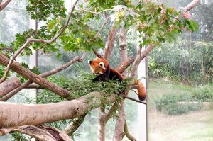 .The Tale of a Gumiho !!Lucu banget rubah kecil yang satu ini, di Everland Zoo kalian juga bisa melihat nya loh gemas banget tapi disini kalian ngga boleh kasih makan sembarangan yaa dan harus jaga jarak banget. Kangen main-main disini apalagi musim gugur jadi ngga perlu panas-panasan deh 🍂🎋By the way siapa yang udah nonton film nya Kim Bum & Lee Dong Wook katanya bagus banget ya?.#VisitKorea #ourheartsarealwaysopen #travelkorea #throwback #autumn #everland #everlandzoo #southkorea #akudankorea #kekoreaaja #ktoid #wowkoreasupporters #workwithhappy #playwithhappy #neverstopplaying #dearbeautylove #clozetteid #loveyourself #speakyourself #neverafraid #changedestiny #daretobedifferent #ajourneytowonderland #like4like #october #2020