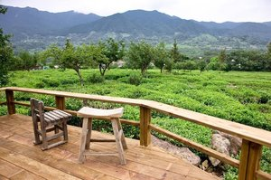. Maeam Tea Museum 🌿 What a stunning tea garden! 🍵 Cuma disini kalian bisa belajar tentang teh Korea dari mulai awal sampai kalian bisa menikmati secangkir teh hangat sambil melihat pemandangan yang hijau ini :) . Where : 348, Agyangseo-ro, Hadong-gun, Gyeongsangnam-do . #timetravel #summer #akudankorea #kekoreaaja #ktoid #wowkoreasupporters #summerinkorea #workwithhappy #playwithhappy #neverstopplaying #dearbeautylove #clozetteid #zilingoid #foodies #foodporn #foodphotography #foodgasm #loveyourself #speakyourself #neverafraid #changedestiny #daretobedifferent #ajourneytowonderland #like4like #may #2020