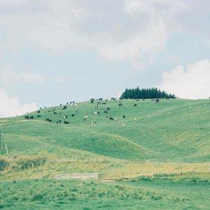 MAKAN CINTA DOANG MAH NGGAK KENYANG  Sepanjang road trip di negara yang populer disebut Kiwi ini pemandangan hijau yang cantik bertaburan di mana-mana. Selain domba, NZ juga terkenal dengan sapi dan produk turunannya. Mulai dari keju, susu sampe New Zealand Prime steak yang lembut empuk enak ituuuh 😘😘. .  Ya ampuuun, mandang ijo-ijo gini aja daku udah seneng, apalagi si ijo yang bisa digenggam di tangan 🤑. Well, gimana ya, makan cinta doang mah nggak kenyang tau. Hehehe. Selamat siang semuanyaaa, jangan lupa maksi yaaa, mamam steak boleh juga lhoo. .  #NewZealand #Auckland #travel #lifestyle #clozetteid
