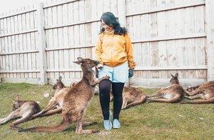 Kangguru aja aku sayang, apalagi kamu! 😜😜 #Gombal hari ini. Btw apa gombalmu ke pacar sore ini?#Melbourne #australia #kangoroo