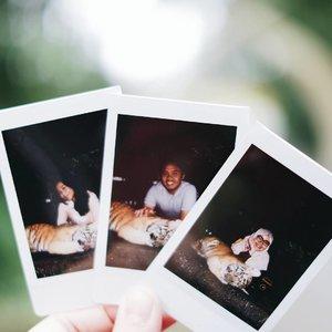 / Baby Zoo with baby tiger / . . . #GoFUJIFILM #Fujifilm #fujifilm_id #instaxindonesia #lifewithinstax #instaxmini8 #FujiXA3 #XA3 #xf35mmf14 #terfujilah #tamansafari #tamansafariindonesia #visitbogor #explorebogor #babyzoo #ClozetteID