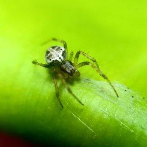 Teringat punya lensa makro ala-ala. Sambil berjemur di teras, sambil hunting sikit laaah.. Sebelum punya lensa makro beneran, lensa miniso ae dulu lah yaaaa, hahaha. 🤣😆..#clozetteid #lisnamotret #lisnadwiphoto #macrophoto #macrophotography #OPPOF7 #starclozetter #naturephotography #spider #spiderman #bukan #avengers apalagi #avengersendgame