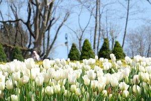 I wonder when I can re-enjoy this beauty. Soon insyaaAllah. Aamiin. . . #clozetteid #throwback #wheninturkey #terfujilah #xt1 #fujifilm #tulips #flower #life #turkey #spring #lisnadwiphoto #travel #traveling