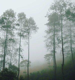 The mystical forest 👻 No need editing or filter, it's naturally monochrome😍 #pesonaPekalongan #ExplorePekalongan #wonderfulIndonesia #pesonaIndonesia  You can find this beautiful  naturally monochrome nature at #Petungkriyono #Pekalongan #centralJava Kawasan pegunungan Petungkriyono ini memang masih kurang dikenal dibandingkan tetangganya, Dieng. Padahal kawasan hitan lindung yang disebut Naturally Dieng, Dieng yang masih natural, ini indah banget dan masih sangat natural.  Banyak banget spot yang instagramable di sekitar sini~😉 #tourism #pariwisata #Indonesia #hutanlindung #mystic #forest #natural #beautiful #dieng #curugbajing #travel #traveling #traveler #trip #lifestyle #photooftheday #pictureoftheday #nofilter #nature #naturelovers #waterfalls #clozetteid