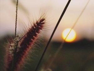 MEMBELAH MATAHARI. Kata siapa aku tidak mencintaimu? Demi kamu, kan kubelah matahari!Malaikat pun tahu, jika diijinkan, aku pasti jadi juaranya..Tapi 'aku yakin, aku mencintai seseorang bukan karena dia memberi yang aku butuhkan, melainkan karena dia memberi perasaan yang tak pernah kusangka sangat kubutuhkan.Kebahagiannya' - Destiny (novel, 2014, bab 4).Dan aku tahu...bahagiamu (bukan) aku...#membelah matahari #matahari #sunset #skyporn #sunsetlovers #nature #naturelovers #love #cinta #lovequote #ilalang #surabaya #instanusantara #photooftheday #pictureoftheday #destinythenovel #clozetteid #poem #puisi #romantic #50mm
