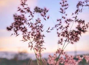 Jarak terdekat kita adalah rindu, jarak terjauh kita adalah waktu.. We're only human. Time is one thing that blurs the feeling. Tik tok tik tok #senja #sunset #twilight #time #rindu #waktu #weeds #beautiful #nature #naturelovers  #ilalang #twilight #pictureoftheday #photooftheday #lifestyle #clozetteid