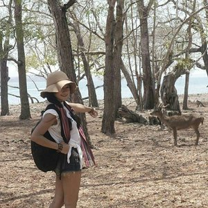 #pesonaIndonesia #saptanusantara Gisele my belle🎶 Look at my deer~😍 This is the end of Komodo's tracking! 💪 My goodness the view's so instagramable 😍😍😍 Komodo National Park is located in the center of the Indonesian archipelago, between the islands of Sumbawa and Flores.  The purpose was to conserve the unique Komodo dragon (Varanus komodoensis) and its habitat, and protect its entire biodiversity, both terrestrial and marine.  In 1986, the Park was declared aWorld Heritage Siteand aMan and Biosphere Reserveby UNESCO, both indications of the Park's biological importance. #deer #komodo #island #Indonesia #komodonationalpark #Park #tracking #heritage #wonderfulIndonesia #traveling #travel #traveler #tourism #trees #summer #lifestyle #outdoor #ootd #ootdindo #ootdmagazine #ootdshare #shortjeans #hat #tshirt #travelinstyle #clozetteambassador #clozetteID @clozetteID