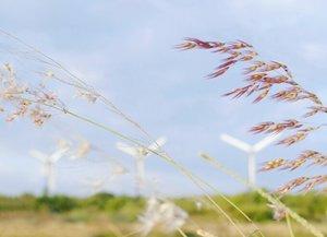 The only difference between a flower and a weed is judgement.😉 Ilalang, rumput atau bunga? Surabaya rasa Holland. #surabaya #windmill #kincirangin #flower #weeds #ilalang #exploresurabaya #instanusantara #instanusantarasurabaya #photooftheday #pictureoftheday #naturelovers #nature #clozetteid