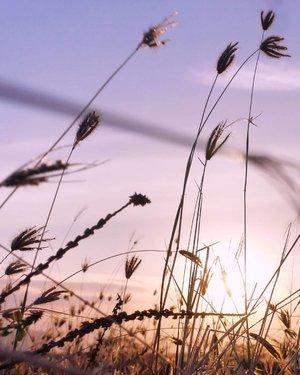 Rasa ini adalah jarak dikali waktu.Baru juga sekejap dia menghilang....aku sudah rindu.#senja #sunset #rindu #weeds #beautiful #nature #naturelovers #instanusantara #ilalang #pictureoftheday #photooftheday  #clozetteid