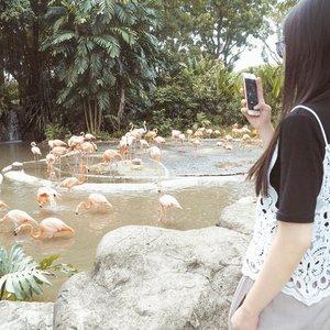 Lagi selfie atau lagi fotoin burung? 😜😜.#letstraveltiff #visitsingapore #singaporeinsiders #igsg #singapore #exploresingapore #todayweexploresg #clozetteid