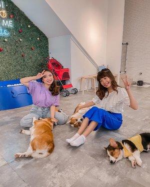 Happy kiddos 🐶  smiling from ear to ear !  . . . . .  . #corgi #style #shotoniphone #doggy #cute #love #clozetteid #puppy #happy #exploretocreate #explorejakarta #happiness #friends #girls