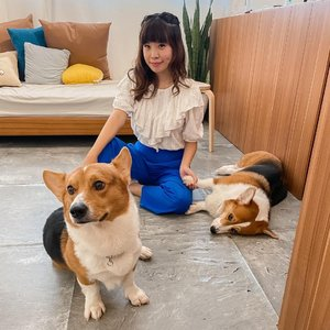 The cuties I can't over with 🐶🐶 .........#corgi #style #shotoniphone #doggy #cute #love #clozetteid #puppy #happy #exploretocreate #explorejakarta #happiness