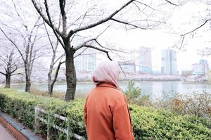 🌸🌸🌸🌸🌸🌸 songpa Naru Park merupakan taman untuk umum di Seoul. Taman ini memiliki dua danau yang ada diantara Songpadaero Boulevard, taman ini juga memiliki jalur untuk berlari dan berjalan-jalan di sepanjang danau.  Kamu tak perlu membayar biaya masuk karena masuk area di sini gratis lho.. Kamu bisa menikmati keindangan bunga sakura di sepanjang danau. Alamat : 136, Samhaksa-ro / 180, Jamsil-ro, Songpa-gu, SeoulTransportasi : Stasiun Jamsil (Seoul Subway Jalur 2), Pintu keluar 2 atau 3.Berjalan lurus sekitar 200m untuk sampai ke pintu masuk Songpa Naru Park. #necgoestokorea #clozetteid