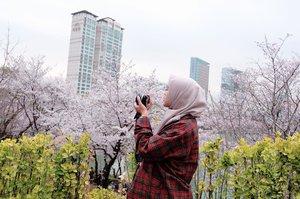 🌸 Banyak yang kurang tahu kalo musim semi di Seoul itu cantik dengan bunga sakura dan view di sana sangatlah indah! Dan tidak usah jauh-jauh sampe Jinhae (5 jam naik bus) untuk liat bunga spring yang indah, karena kamu tinggal datang ke 석촌호수 Songpa Naru Park ( Seokchon Lake)  buat liat bunga sakura bermekaran di seluruh area danau, dan lokasinya tepat di tengah kota Seoul. Songpa Naru Park merupakan taman untuk umum di Seoul. Taman ini memiliki dua danau yang ada diantara Songpadaero Boulevard, taman ini juga memiliki jalur untuk berlari dan berjalan-jalan di sepanjang danau.  Kamu tak perlu membayar biaya masuk karena masuk area di sini gratis lho.. Kamu bisa menikmati keindangan bunga sakura di sepanjang danau. Alamat : 136, Samhaksa-ro / 180, Jamsil-ro, Songpa-gu, SeoulTransportasi : Stasiun Jamsil (Seoul Subway Jalur 2), Pintu keluar 2 atau 3.Berjalan lurus sekitar 200m untuk sampai ke pintu masuk Songpa Naru Park. 📸 @nelymotret #necgoestokorea #clozetteid