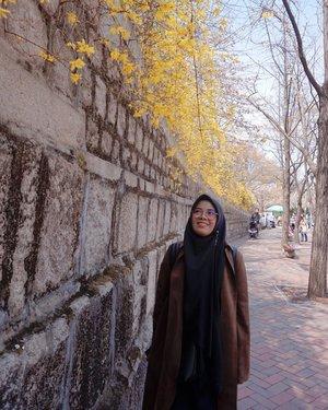 Deoksugung Doldam-gil (Deoksugung-gil, Jung-gu, Seoul)Transportasi : City Hall Station (Seoul Subway Jalur 1, 2), Exit 1, 2 atau 12Berjalan di sepanjang Dinding Batu Istana Deoksugun adalah pengalaman yang tak terlupakan. Panjang jalan sekitar 900m. Ada lebih dari 20 bangku (bisa duduk jika kelelahan) dan 130 pohon di sepanjang jalan (membuat view jalan semakin cantik). Jika akan datang ke Istana Deoksugung wajib banget mengelilingi dinding batu istana sebelum masuk, karena kamu akan disuguhi view yang ada di drama goblin. Setelah mengelilingi dinding batu istana deoksugun bisa langsung menuju istana deoksuhun. 😊📸 @eliansy  #necgoestokorea #clozetteid