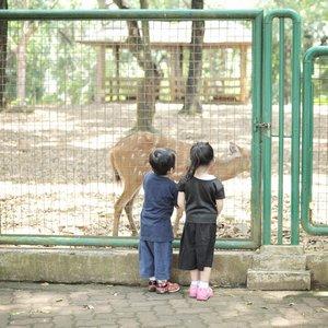 👧🏻👦🏻 . 📸 @dennyirawanphotos . #kids #cute #brotherandsister #toodler #parenting #zoo #bestoftheday #instagood #potd #outfitoftheday #clozetteid #like4like #lifestyleblogger #lifestyle #childhood