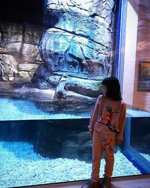 Meet the penguin 🐧 . . @jakartaaquarium recommended buat ngajak anak2 mengenal biota laut, meski ngga segede sea world tapi atraksi mermaid & 5Dnya lumayan menyenangkan 💙 . Sempat nyoba jg makan di @pingoorestaurant makan sambil liat pinguin 🐧 🐧 meski ada minimum pembelian, kalau makan banyakan pasti ke cover sih... . Pengen review jakarta aquarium & pingoo resto di blog... doain semoga istiqomah nulis yaa 😄 . . #rekomendasiliburan #jakartaaquarium #rekomendasiwisatajakarta #jakartainfo #wisatajakarta #jakartavenue #instajakarta #jakartafoodies #jakartakuliner #clozetteid #infojakarta #rekomendasijakarta #jakartalife #liburdijakarta #holiday #libursekolah #rekomendasikuliner #jakartaculinary #instaplace #instavenue