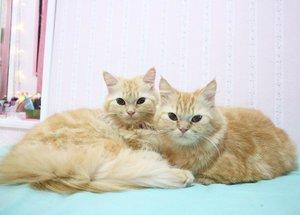 Kala & Abigel😘😺😸 #clozetteid #catlovers