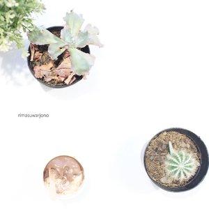Bloom where you are planted . . . . . . #flatlays #flatlaystyle #flatlaynation #cactus #whiteaddict #minimalist #ggrep #whiteaesthetic #tumblrpost #clozetteid