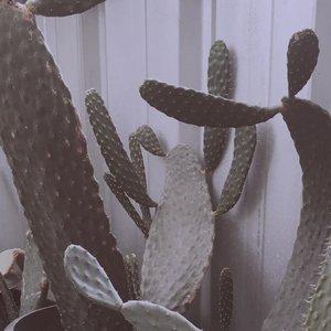 Ada yang tajam tapi bukan berita gosip di acara Sil*t 🌵...#clozetteid#cacti#dirumahaja#selfisolation #kaktus#cactus#minimalfeed#ruedaily