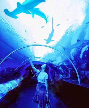 Part of your world 🧜🏻‍♀️ Not underwater but more like under water, getting overwhelmed By this giant shark🦈@rwsentosa Good Morning 🙆🏻‍♀️ #AbellinSG #singapore #clozetteid #cotd