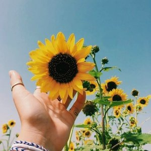 Sebelum sejauh matahari, kita pernah sedekat nadi. ^💛^ ...#clozetteID #revanisanabella #sun