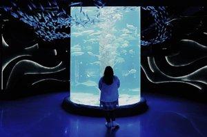 Kadang kita lupa untuk menikmati sesuatu, entah di dalam situasi gelap sekali pun. . Stop, take a break, take a deep breath, relax. . Gak, aku bukan ingin nangkep ikanny buat jadi sushi kok. 👌 . #vinapiknik . . . #aquariumjakarta #jakartaaquarium #aquarium #fish  #liburanjakarta #wheretogojakarta #jakartatourism  #wisatajakarta #jakartanews  #malljakarta #centralpark #neosohomall  #aquascape #jakartaaquascape #aquascapejakarta  #akuariummini #clozetteid #glowinthedark #dark #throwbackthursday #latepost #plussizeootd #happy #traveling
