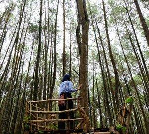 The pine forest . . . #clozetteid #clozettetravel #ggrep #ggreptravel #hutanpinusomogiri #thepineforest #explorejogja #jogjagetaway #travelwithhijab