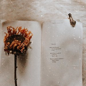 Solace from the universe of us.........#clozetteid #bookphotography #bookish #bookstagram #booktography #nature #aesthetic #photography #bloggerperempuan #flowers #bookworm #instareads #bibliophile #bookstagrammer #instabooks #bookslovers #reading #ilovereading #langleav