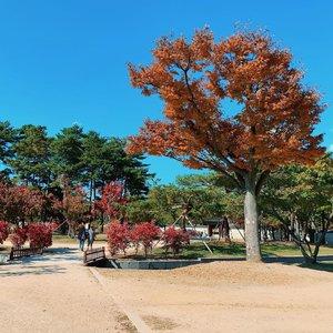 Alasan traveling ke Korea kali ini adalah mau ngerasain musim gugur di sini. Paling suka emang musim gugur sih, karena udaranya adem disertai pemandangan cantik dengan warna-warni merah, kuning, dan oren.  Selain itu udah kangen Korea karena terakhir ke sini tahun 2017. Btw slide ke-4 akan membuat kalian terkejut! 🤪  #travel #travelgram #traveler #instatravel #chikatravelstories #chikastufftrip #clozetteID #seoul #autumn #fall #autumntrip #korea #iPhoneXS