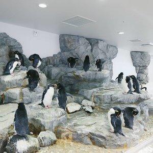 超可愛いpenguins at Osaka Aquarium Kaiyukan 🐧🐧🐧 Click link in bio to read my guide to the aquarium and Tempozan Ferris Wheel 🤗 #bigdreamerblog . . . #clozetteid #BigDreamerInJapan #osaka #japan #japanloverme #ggrep #japantravel #japantrip #japanguide #travelblogger #travelblog #traveler #wanderlust #theglobewanderer #여행 #여행그램 #여행스타그램 #오사카 #일본여행 #旅行 #大坂