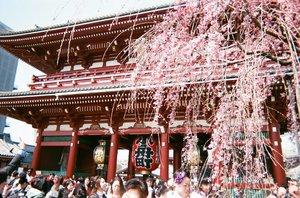 おやすみなさい!#35mm . . . #clozetteid #asakusa #sensoji #disposablecamera #tokyo #japan #japanloverme #filmisnotdead #japanguide #tokyoguide #traveljapan #exploretokyo #travelblogger #travelblog #lifestyleblogger #indonesianfemalebloggers #beautynesiamember #ggrep #여행 #여행스타그램 #인스타여행 #여행블로거 #일본 #일본여행