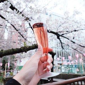 Pink martini with pink view 💖 Iseng nyobain martini di Meguro River, lah ternyata enak 🙈🙈 Tasted even better with grilled sausage!! Gegayaan doang ngeliat orang2 minum trus penasaran, harganya 600 yen kalo ga salah 🤔 Minumnya pas perut masih kosong, such a fancy breakfast lol 😂😂 . . . #clozetteid #japantravel #japanloverme #ggrep #travelblogger #cherryblossom #jntoid #ilovejapan #solotravel #BigDreamerInJapan #cherryblossomtokyo #meguroriver #여행스타그램 #여행 #旅行 #일본여행